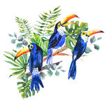 Tropical summer watercolor greeting card with toucan Stock Image