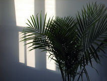 Tropical sun Royalty Free Stock Photography
