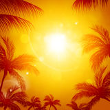 Tropical Sun among Palms Stock Photos