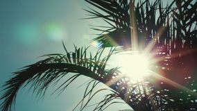 Tropical sun. Panning shot of sun twinkling in palm leaves against clear sky stock video