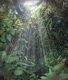 Tropical sun rainforest light. Heavy planted wet tropical rainforest,light falls through the leaves Stock Photos