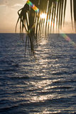 Tropical sun rise Royalty Free Stock Photography