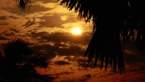 Tropical Sun Rising Between Palm Trees in 4K stock footage