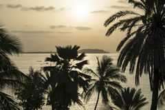 Tropical sunrise – Silhouettes of coconut palm trees facing the sea Stock Images