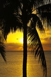 Tropical sunrise Stock Photography