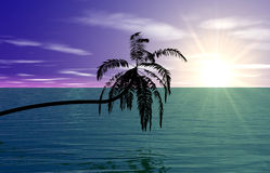 Tropical Sunrise. Background of a tropical sea and a palm Royalty Free Stock Photos