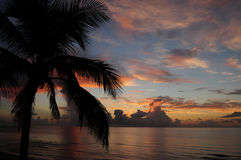 Tropical sunrise over ocean. With silhouette of palm tree Stock Photos
