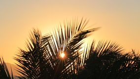 Tropical sunrise. With palm leaves stock video