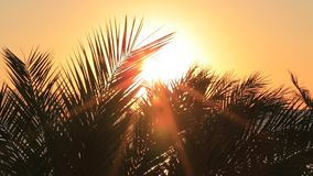 Tropical sunrise. With palm leaves stock footage