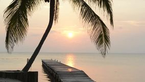 Tropical Sunrise Palm Tree. Tropical sunrise over the ocean in Belize with wooden jetty stock video