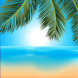 Tropical sunrise with palm trees background. Illustration of Tropical Sunrise on the Beach with Palm Tree and Lens Flares Royalty Free Stock Image