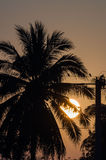 Tropical sunrise, palm trees. And big sun Stock Photos