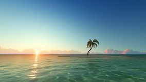 Tropical sunrise with palm trees and clear sky. Tropical sunrise with palm trees and clear blue sky stock video footage