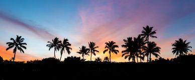 Tropical Sunrise Stock Image