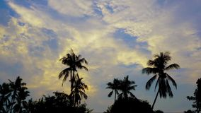 Tropical sunrise with palm trees, timelapse. Tropical sunrise with palm trees timelapse stock video