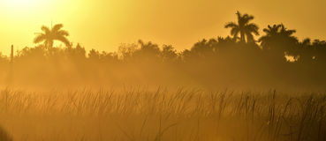 Tropical sunrise Royalty Free Stock Image
