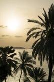 Tropical sunrise – Silhouettes of coconut palm trees facing the sea Stock Photo