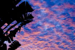 Tropical Sunset 1. The sky turns blue and red as the sun sets over a palm tree in Singapore Royalty Free Stock Images