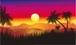 Free Tropical Sunset Royalty Free Stock Image - 10084376
