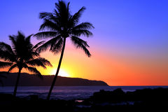 Tropical sunset. A beautiful tropical sunset in Hawaii Royalty Free Stock Images
