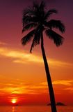 Tropical sunset Stock Photos