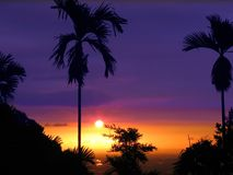 Tropical Sunset. Between two palm trees Royalty Free Stock Photos