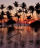 Tropical Sunset. A sunset over a pool in the caribbean Royalty Free Stock Photography