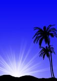 Tropical sunset. With palms and sun Stock Photography
