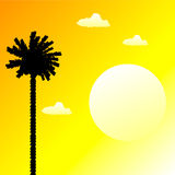 Tropical sunset. And palm tree Royalty Free Stock Photos