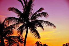 Tropical Sunset. Palm Trees and Pinky Yellow Sunset Sky. Tropical Place Stock Image