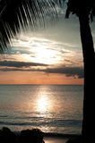 Tropical Sunset. MWS: Golden sunset over the tropical Fijian sea fringed by a coconut palm. Golden & salmon hues Stock Images