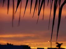 Tropical Sunset. Picture of a sunset taken from my house roof Royalty Free Stock Images