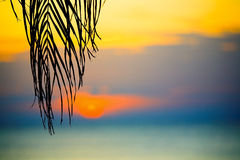 Tropical sunset Stock Photography