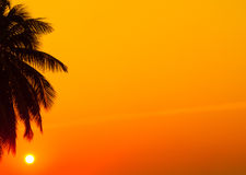 Tropical sunset. Sunset on the beaches of Zazibar, Tanzania in Africa Royalty Free Stock Image