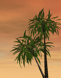 Tropical sunset. 3d rendered image of palm trees at sunset in the tropics Stock Image