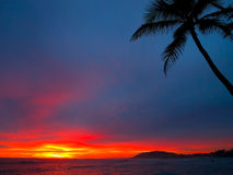 Tropical sunset. Sunset and the coast line and coconut palm Royalty Free Stock Photos