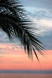 Tropical sunset Royalty Free Stock Photography