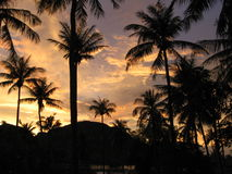 Tropical sunset. Palms siluete on the burning sky Stock Photo