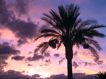 Tropical sunset. Tropical cloudy sunset in pinks & blues with palm tree scene Stock Image