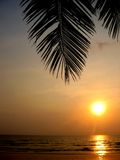 Tropical sunset. Relaxing under a palm tree watching the sunset Stock Photography