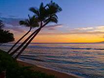 Tropical Sunset. Palm trees in sunset on Maui Hawaii Stock Images