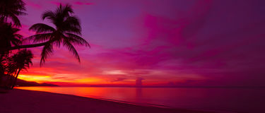 Free Tropical Sunset Stock Photography - 86228192