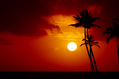 Tropical sunset. Sun setting over the ocean with palm trees in the foreground royalty free stock image