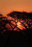Tropical sunset in african bush stock photos