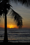 Tropical Sunset in Australia. A sunset shot in Australia featuring a palm tree and the sea Royalty Free Stock Photos