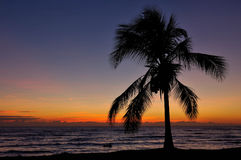 Tropical Sunset in Australia. A sunset shot in Australia featuring a palm tree and the sea Royalty Free Stock Image