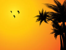 Tropical sunset background Stock Image