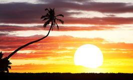 Tropical sunset background Royalty Free Stock Photography