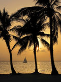 Tropical sunset on cayman islands. Three palm trees over beach on Cayman Islands Royalty Free Stock Photos