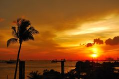 Tropical sunset with coconut tree near the sea Royalty Free Stock Photo